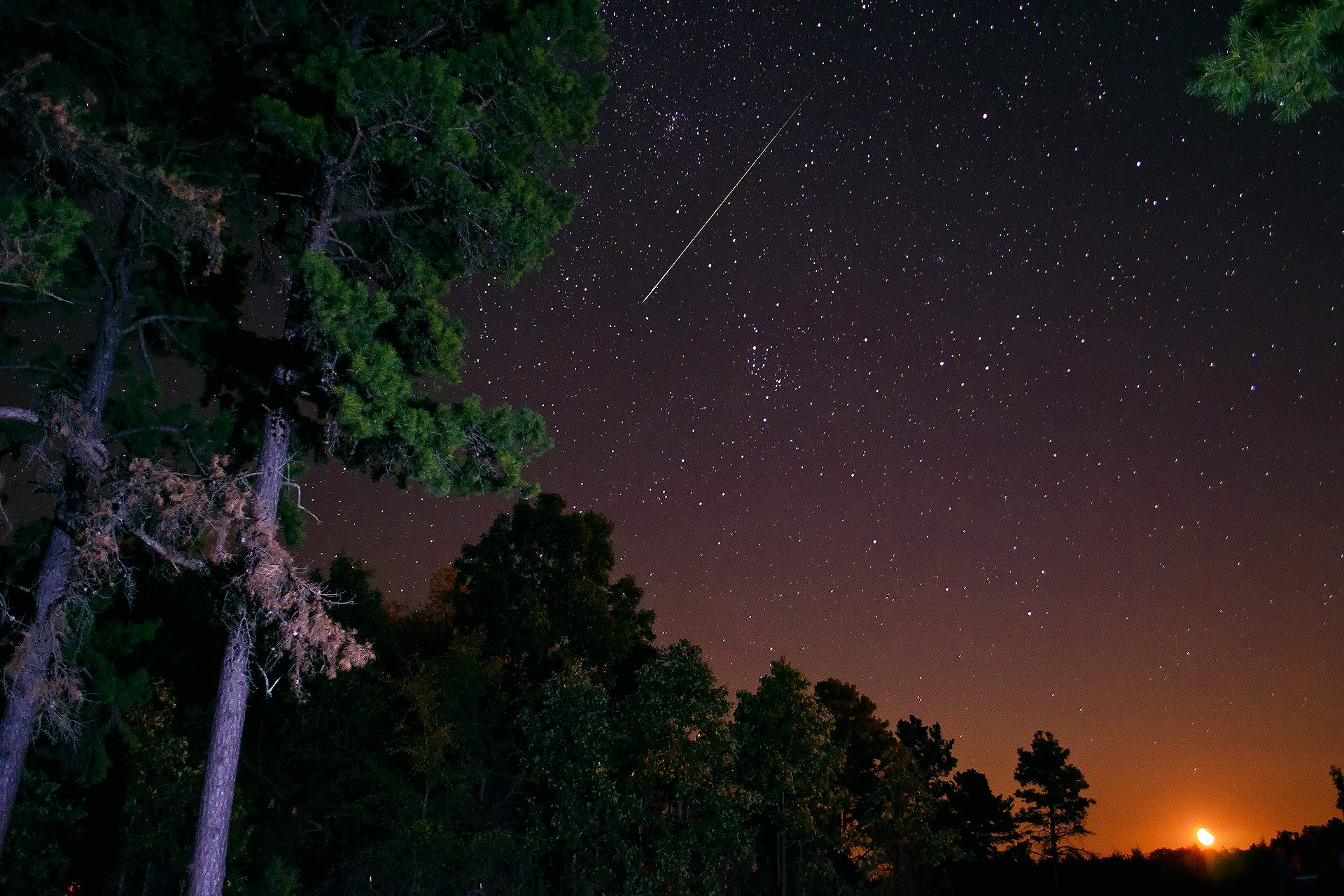 night-sky-stars-forest-pine-trees-the-moon