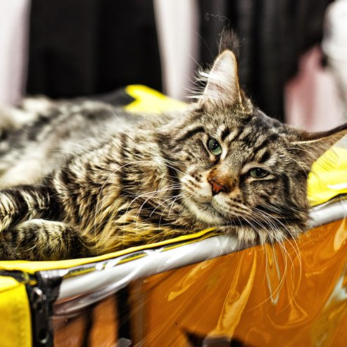 События  Один в один? Сравниваем кошек с их хозяевами.
