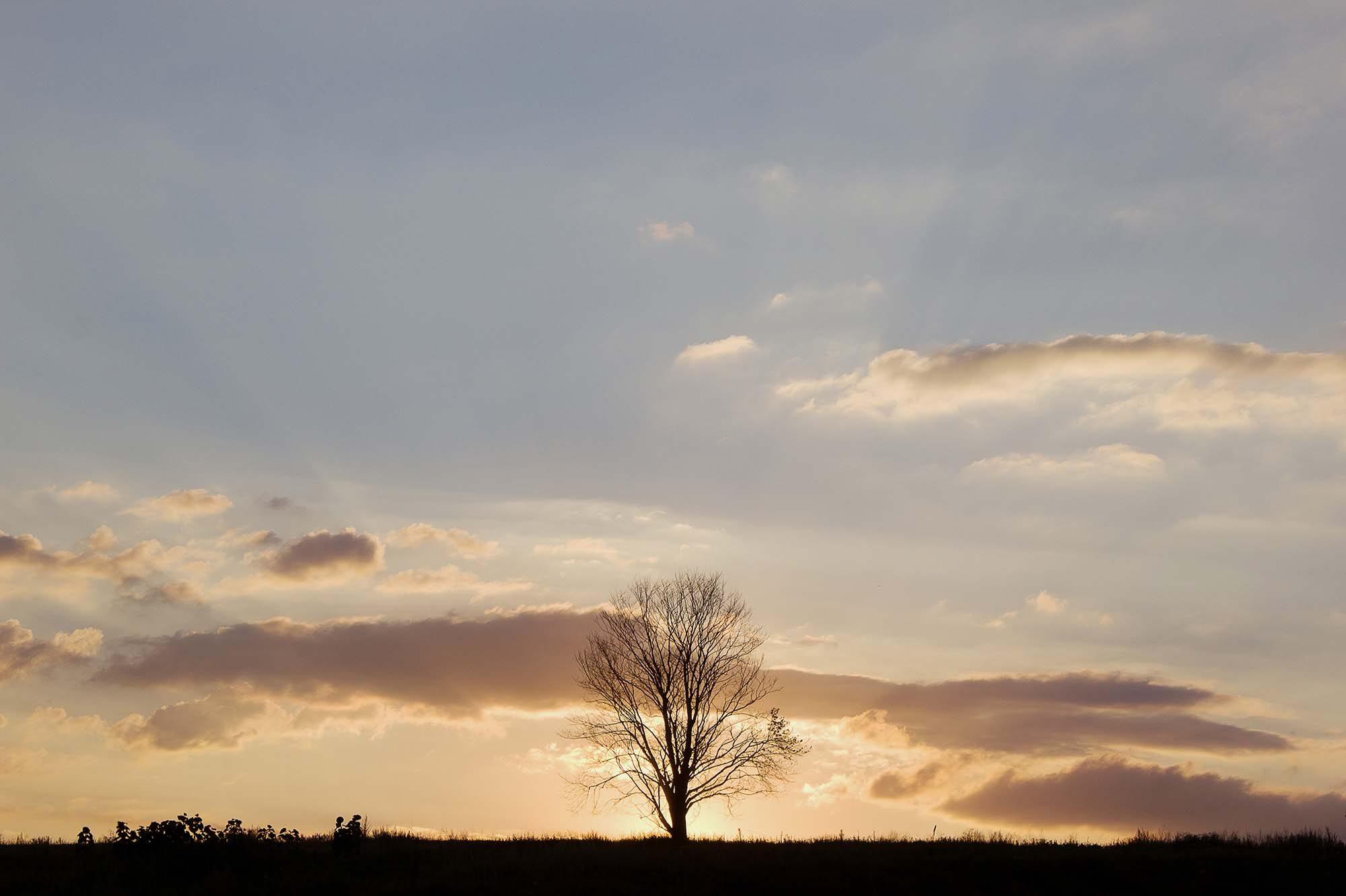 Темы  Одно дерево, восемь фото, две награды